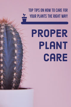 Pink Plant Care Tips Pinterest Graphic with Cactus Plants