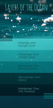 Blue and Turquoise Ocean Layers Infographic Infografica