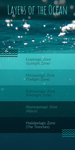 Blue and Turquoise Ocean Layers Infographic Science