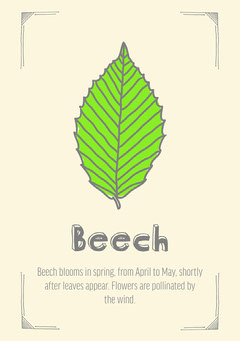 Green and Grey Leaves Beech Flashcard After School