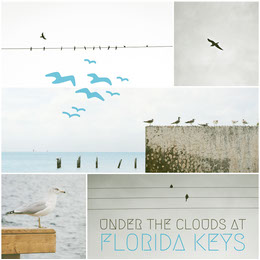 Blue and White Florida Keys Travel and Tourism Instagram Square with Collage Colagem de fotos