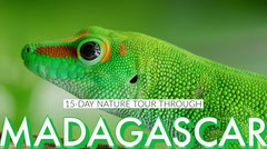 Green Madagascar Travel Blog Post Graphic with Lizard Animal