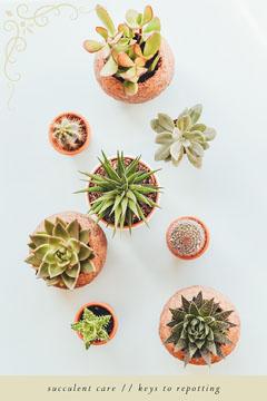 Succulent Houseplant Care Pinterest Graphic Cactus