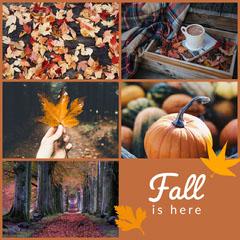 Fall Seasonal
