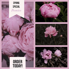 Pink Spring Special Peony Florist Ad with Flower Collage Spring