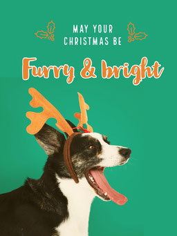 Green With Funny Dog Christmas Card jeff-test-5