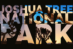 Black and Beige Collage Joshua Tree National Park Card Trees