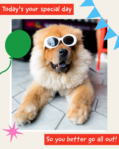Colorful Funny Illustrated Dog Photo Birthday Card Birthday Card with Quotes