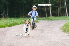 Chase Landscape Text Meme Generator Copy Pets