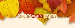 Warm Earthy Tones Autumn Leaf Facebook Profile Cover Fall