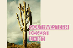 Pink and Warm Toned Desert Facebook Banner Cactus