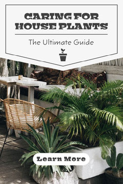White and Grey Caring For House Plants Pinterest Garden