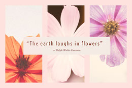 """The earth laughs in flowers""  Colagem de fotos"