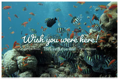 Great Barrier Reef Australia Travel Postcard Fish