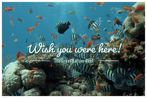 Great Barrier Reef Australia Travel Postcard Rejsepostkort