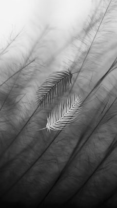 Feathers Black and White Phone Wallpaper Background