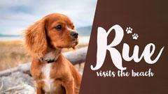 Brown Puppy Visits Beach Youtube Thumbnail Pets