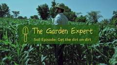 green yellow field gardening the garden expert YouTube channel art Garden