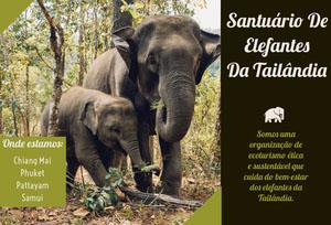 Thailand elephant sanitary travel brochures  Folheto dobrável