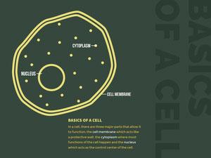 BASICS OF A CELL Presentation