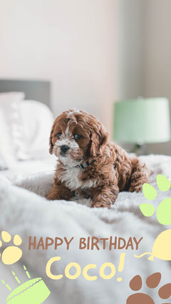 Light Toned, Beige and White Puppy Birthday Instagram Story Pets