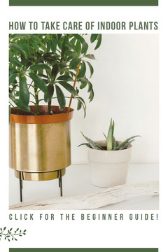HOW TO TAKE CARE OF INDOOR PLANTS Pinterest