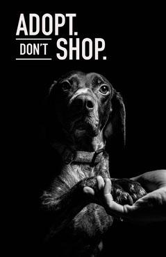 adopt don't shop poster  Grey