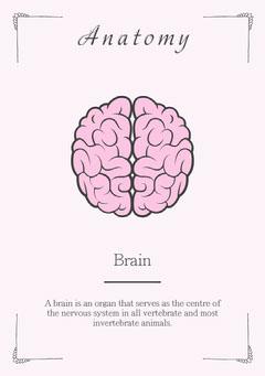 Anatomy - Brain Flashcard Education