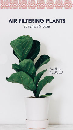 Green and White Healthy Houseplant Instagram Story Wellness