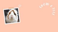 Orange Background and Guinea Pig Polaroid Photo Zoom Background Animal