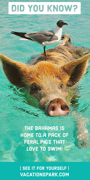 Bahamas Vacations Travel and Tourism Vertical Ad Volantino pubblicitario