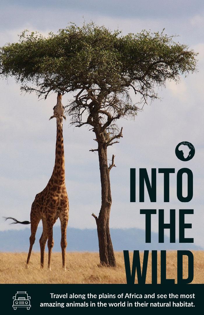 INTO THE WILD Ideen für Flyer