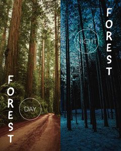 ig portrait Forest