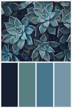 succulent plants color mood broad  Teal