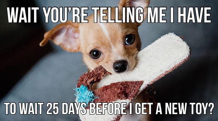 Light Toned Funny Christmas Meme Twitter Cover Dog Memes